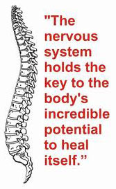 The nervous system holds the key to the body's incredible potential to heal itself